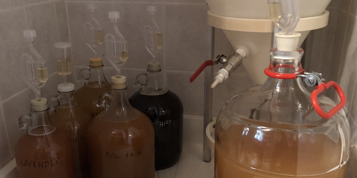 Seven gallons of mead fermenting